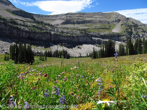 What could get better than hiking through this? Meadows, flowers, and cliffs atop the Stairway to Heaven en route to the Alaska Basin Overlook, Jedediah Smith Wilderness and Grand Teton National Park, Wyoming