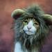 Little Lion by cuppyuppycake