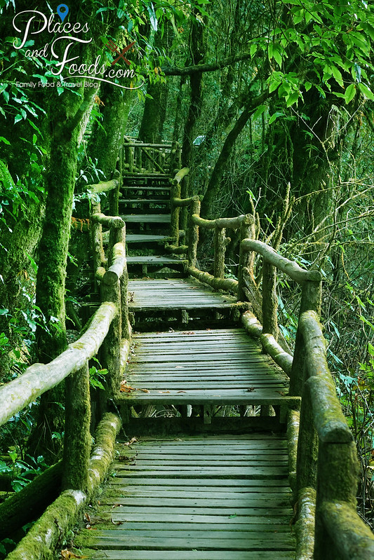 doi inthanon ang ka nature trail long platform