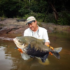 O Brasil tem uma diversidade incrível de peixes. Na foto, um belo tambaqui fisgado pelo Rubinho de Almeida Prado no Rio Teles Pires  Siga: @rubinhopescador_oficial   #pesqueesolte #baitcast #pescaesportiva #sportfishing #fishing #flyfishing #fish #bassfis