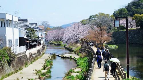 castle water 日本 himeji sakura cherryblossoms moat worldheritage 関西 さくら 兵庫県 姫路城 世界遺産 観光 堀 清水門