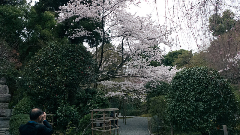 osaka-kyoto-nara-236