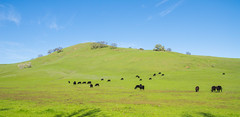 Vaca Mountains View - Fairfield - California - 21 February 2016