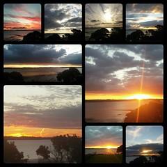Puriri Sunsets 2016