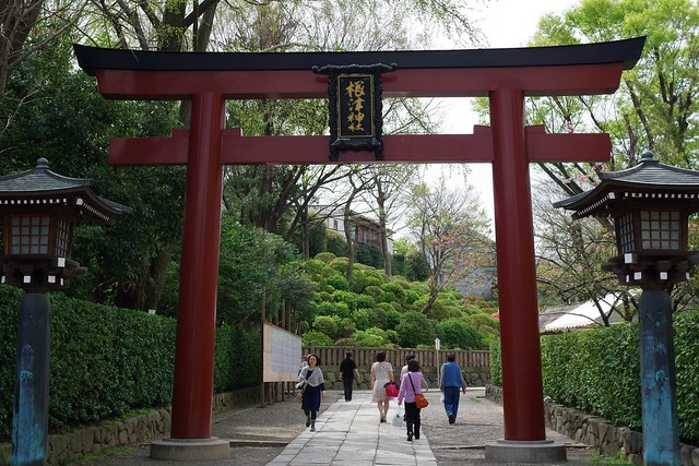 2016/04/09根津神社つつじ祭り-0