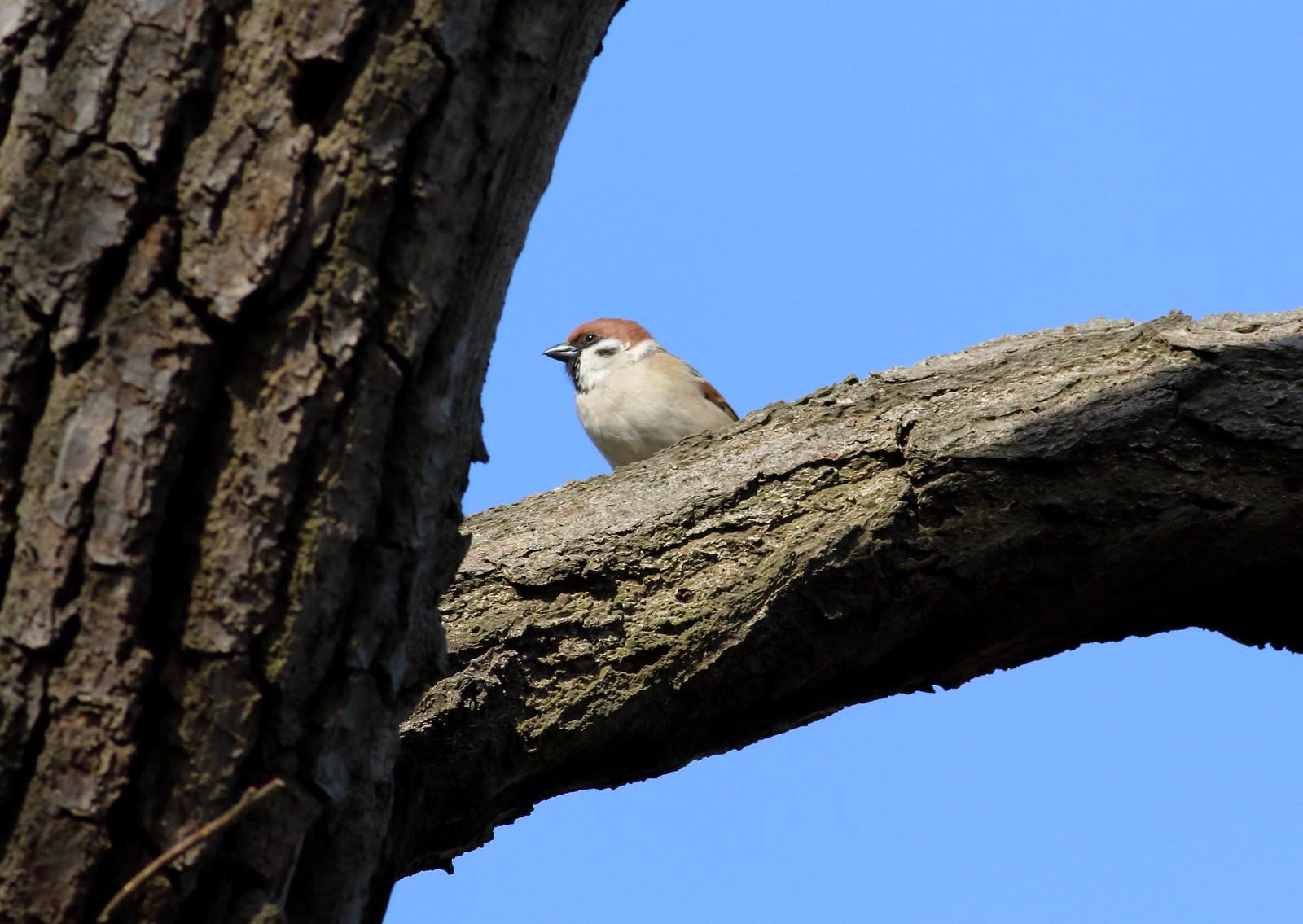 sparrowsetc0025