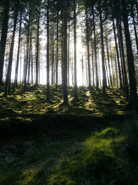 Afternoon sunlight through the trees