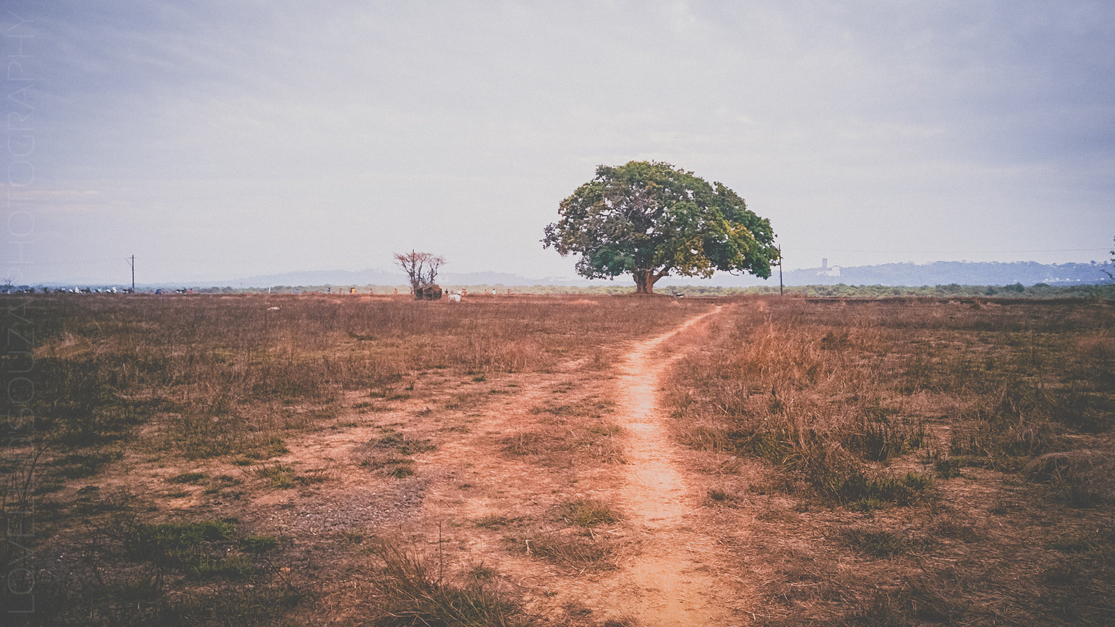 The tree along the Divar road