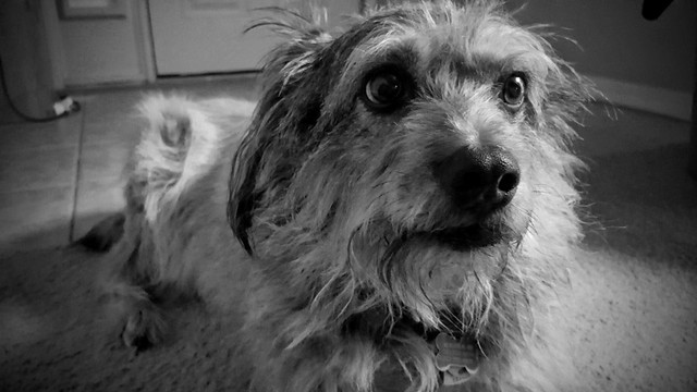 05:366 Scrappy, the terrier mix.