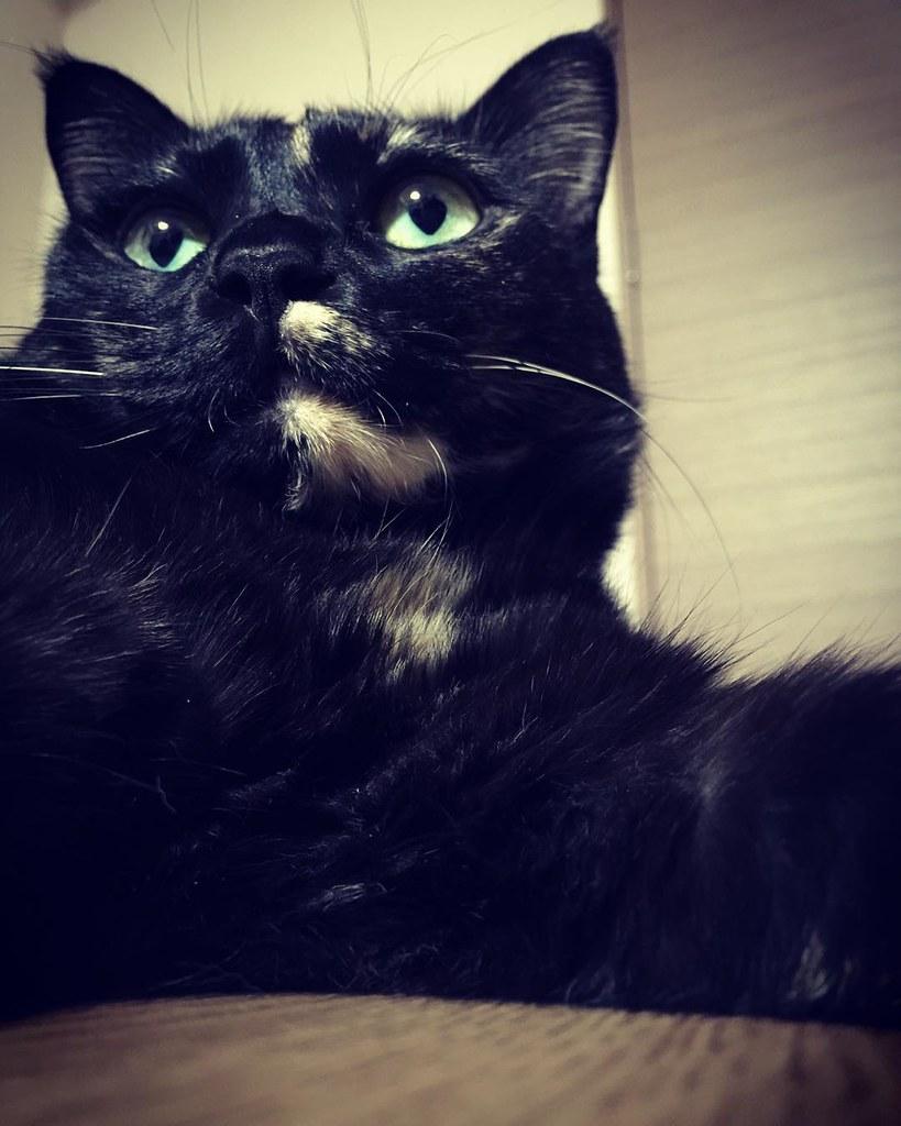 釣られたっ😮😮😮 #cat #cats #catsofinstagram #catstagram #instacat #instagramcats #neko #nekostagram #猫 #ねこ #ネコ# #ネコ部 #猫部 #ぬこ #にゃんこ #ふわもこ部