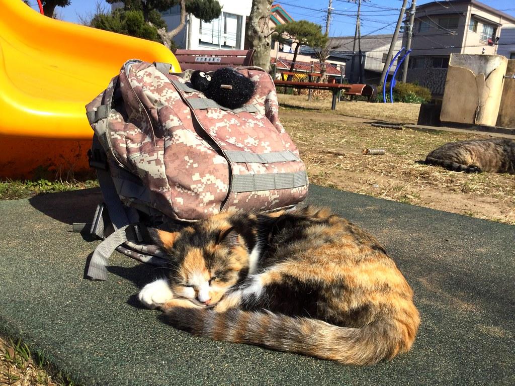 千葉這裡就不像札幌那麼冷,來到銚子,小小的漁港。經過一個公園坐著休息,兩隻肥肥貓過來給我騷癢,然後悠閒的曬太陽!這隻花色貓的毛很柔軟,她很愛乾淨!  #travel #traveltojapan #japan #cat #cats #park #choshi #street 千葉這裡就不像札幌那麼冷,來到銚子,小小的漁港。經過一個公園坐著休息,兩隻肥肥貓過來給我騷癢,然後悠閒的曬太陽!這隻花色貓的毛很柔軟,她很愛乾淨!  #travel #traveltojapan #japan #cat #cats #park #choshi #street Photo by Toomore