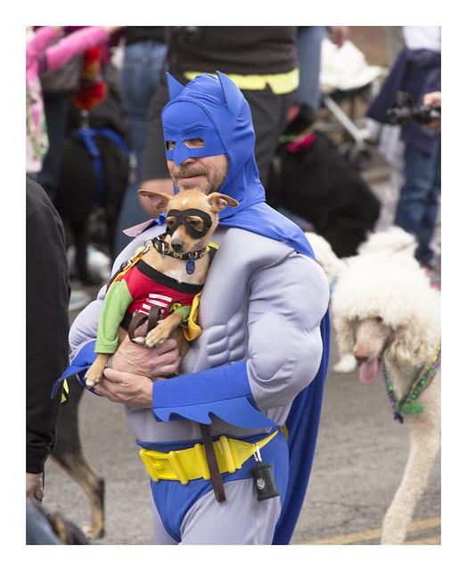Dog Parade 2016-01-31 5