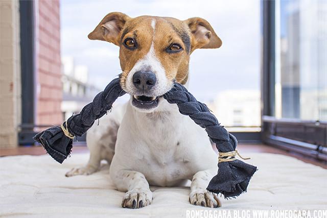 Mordedor para perro DIY