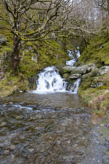 Elan Valley Stream