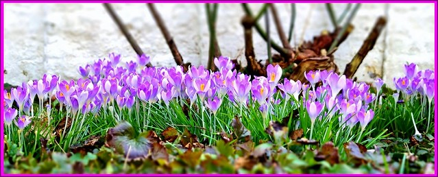 Spring is on its way