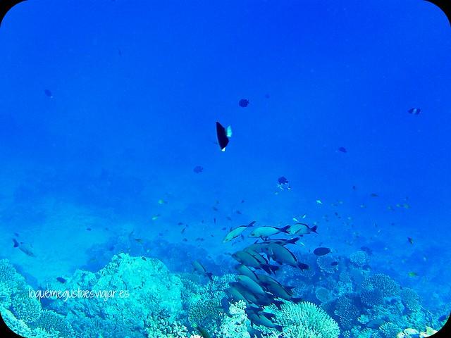 Maldivas9