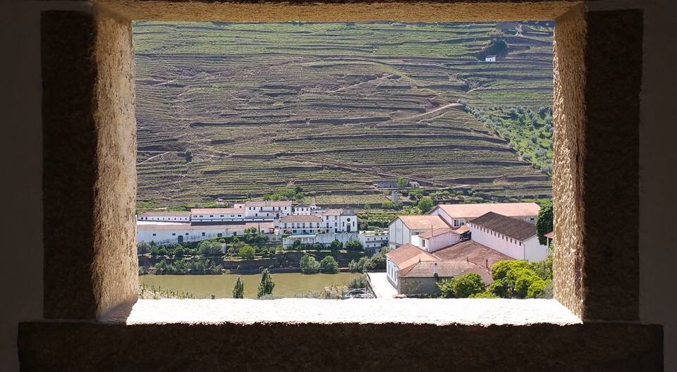 .. vineyards in Portugal ..