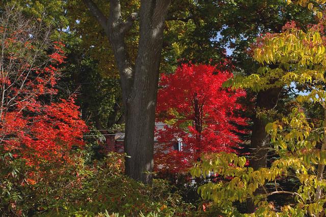 fall foliage; 22 Parker Rd; Wakefield, MA (2015)