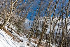 冬枯れの雪道
