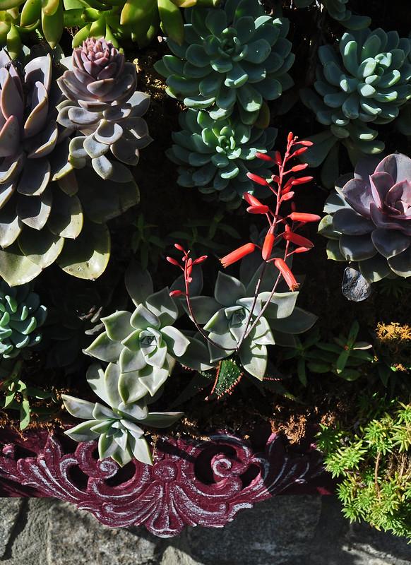 Succulent Picture Frames (4)