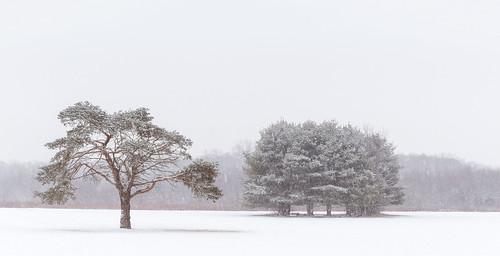 trees winter snow nature landscape us newjersey unitedstates snowstorm highkey fallingsnow southbrunswicktownship davidsonsmillpondpark