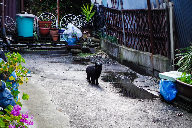 Today's Cat@2016-03-15