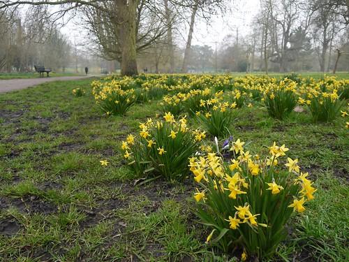 Spring in Beddington Park