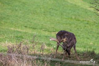 Tierrettungseinsatz Bad Schwalbach 09.04.2016