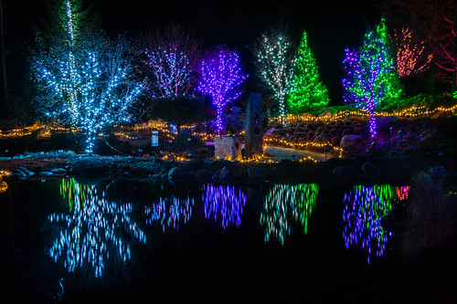 christmas reflection lights maine coloredlights boothbay dmbg coastalmainebotanicalgarden gardenaglow