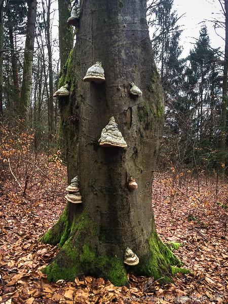 Baum mit Konsolenpilzen