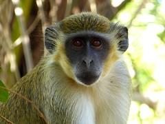 新年快樂~祝大家羊羊得意喔!    Happy Chinese New year! / Year of the monkey