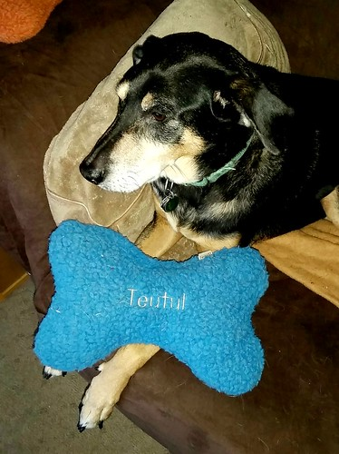 Rescued Senior Dog and his LL Bean personalized dog bone pillow - Lapdog Creations