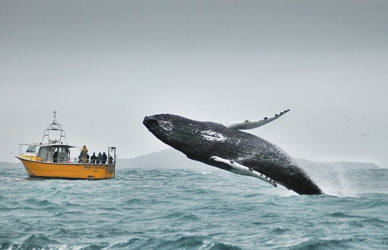 world-whale-day-photos-321__880