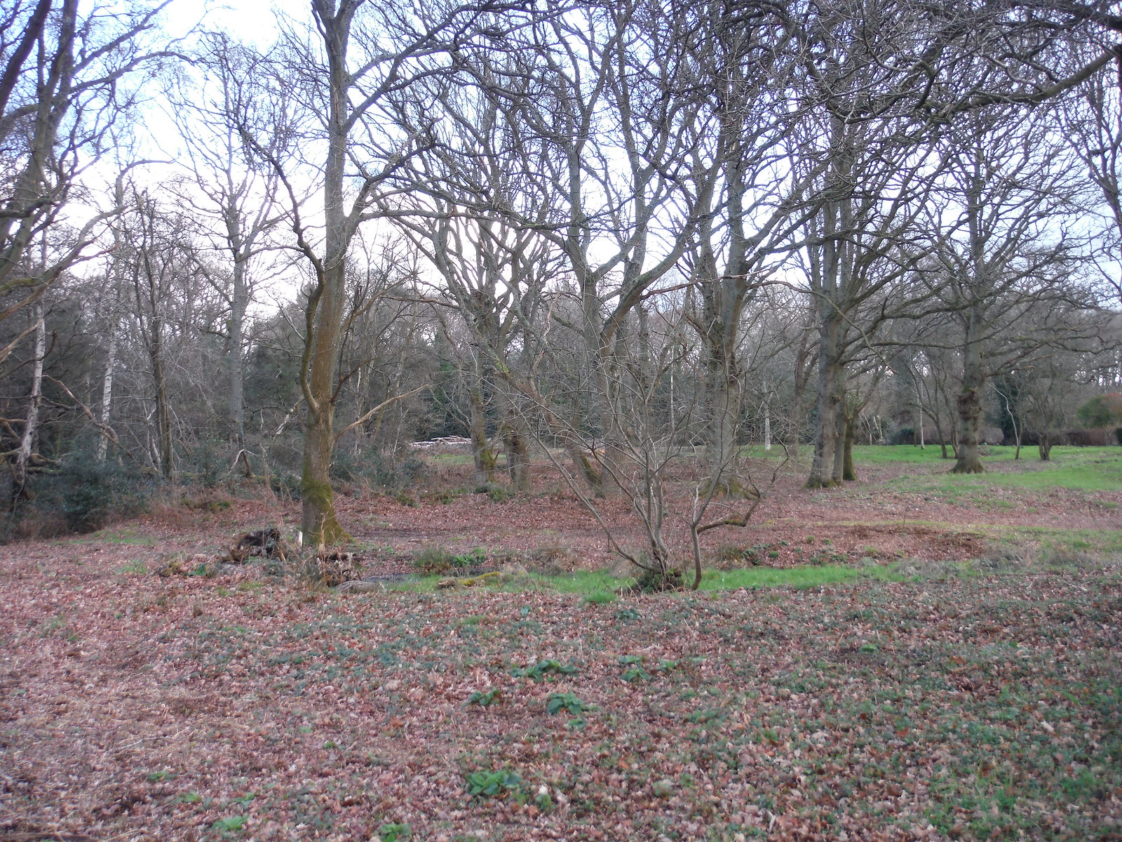 Clearing in King's Copse, Stanford Dingley SWC Walk 117 Aldermaston to Woolhampton (via Stanford Dingley)