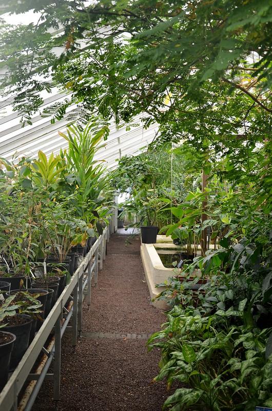 botanical garden tu delft