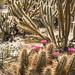Cactus Spring by john farrell macdonald