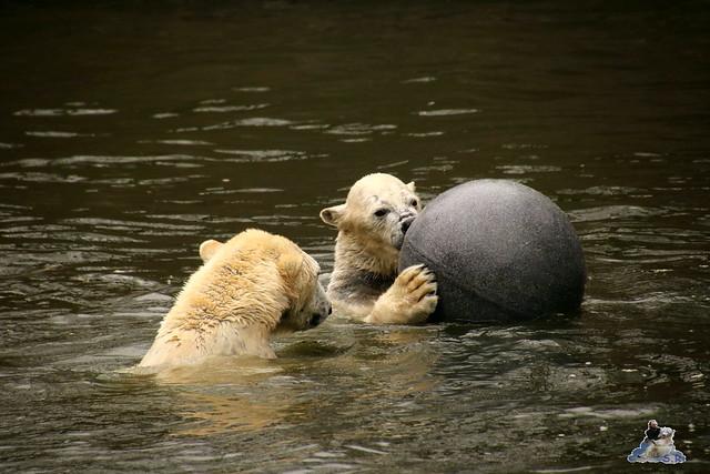 Tierpark Berlin 25.03.2016  0116