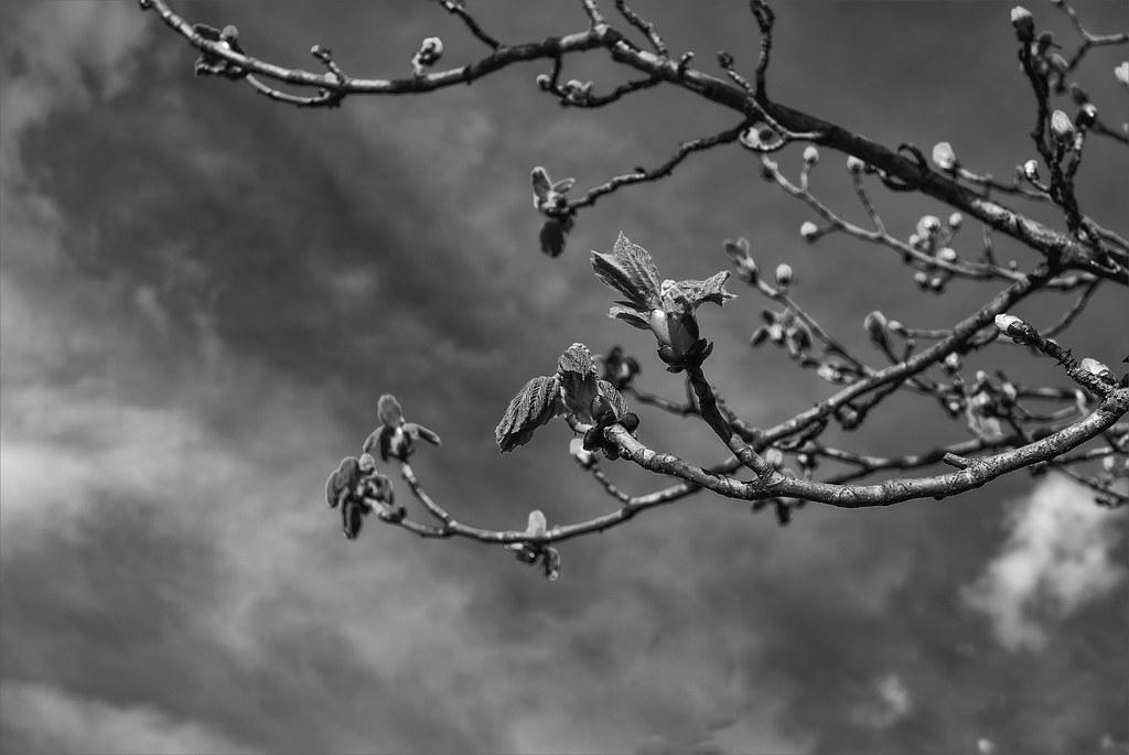V'la l'printemps ... 26041353310_86edb05210_b