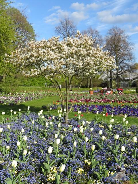 Britzer Garten Tulipan 22.04.2016  045