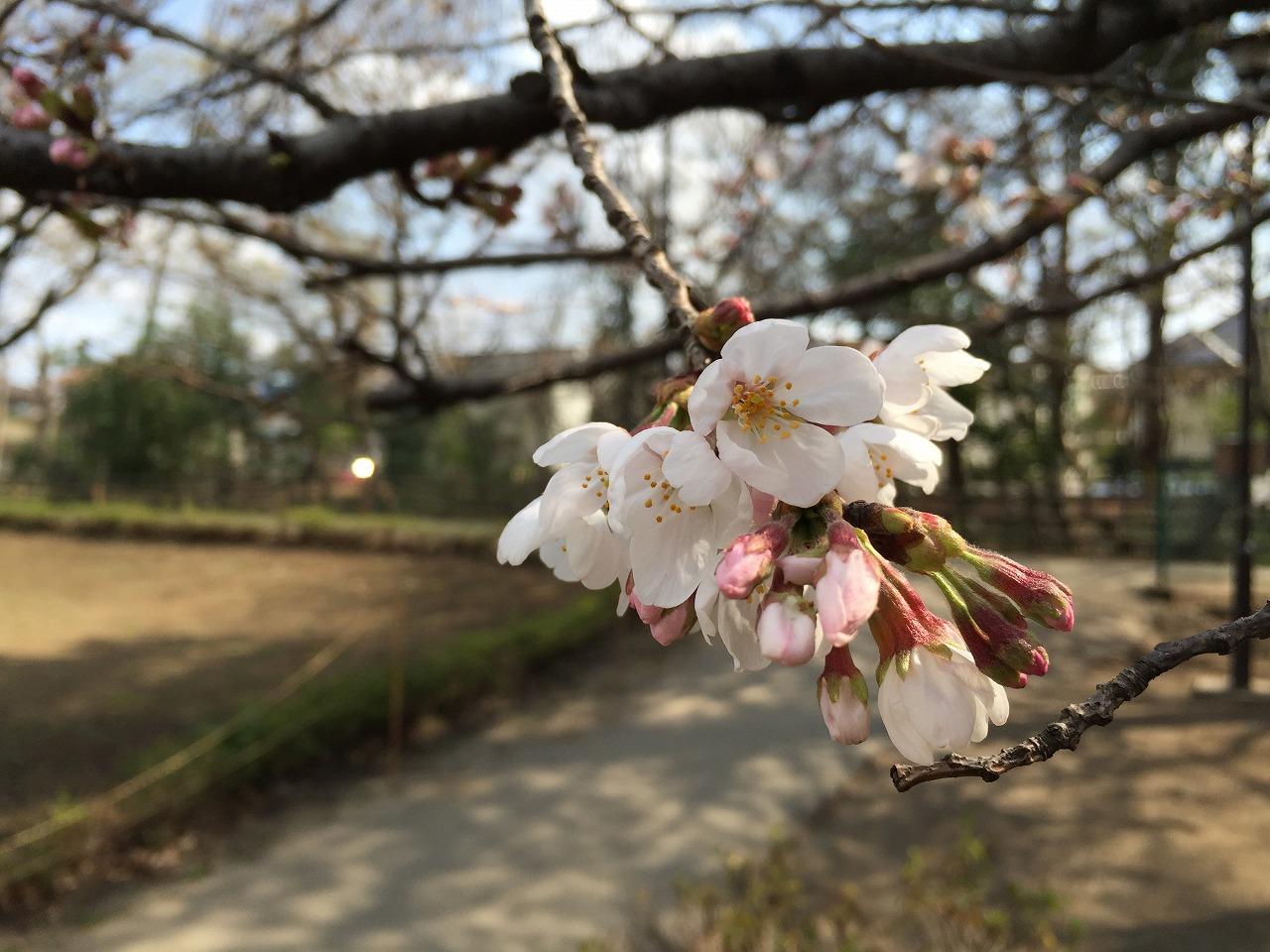 20160327_上水公園 (2)