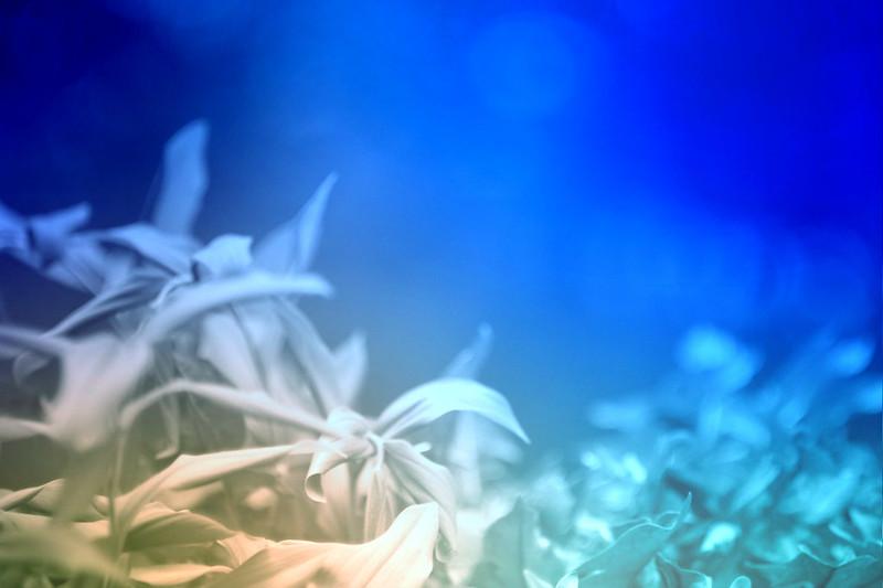 blur-dreamy-texture-texturepalace-73