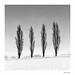 4TREES.jpg by Neil Hulme.