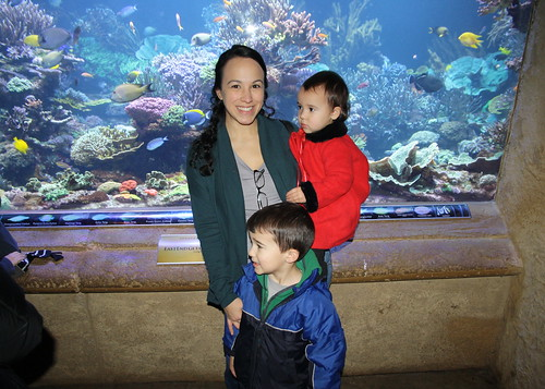 Aquarium- January 2016