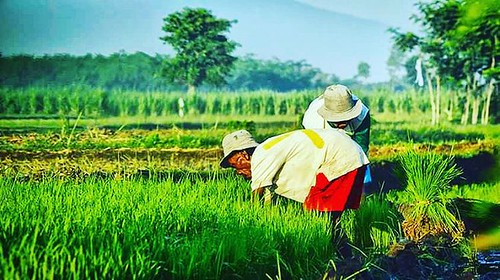 Time to farming My uncle is farmer And i proud it   #photograph #photogram #photography #hot #photographer  #selfie #dubsmash #groufie #dubsmashindonesia #music #food #foodporn #foodie #kpop #renald_photographer #canon #traveler #travel #instatravel #vine