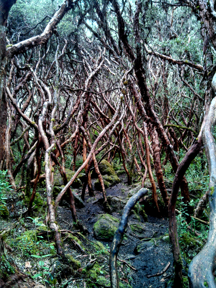 forest in Cajas