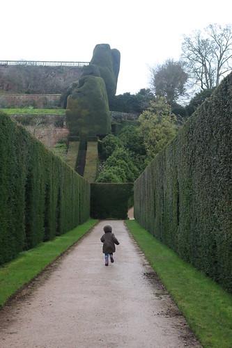 Powis Castle hedges 2