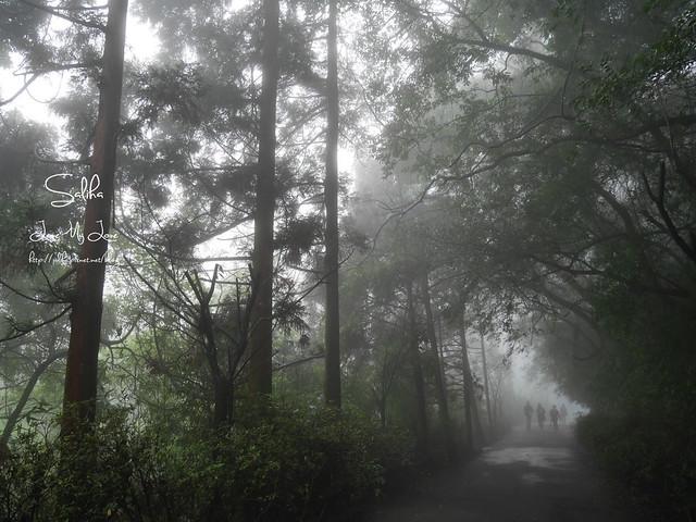 台北一日遊景點陽明山花季賞櫻花 (4)