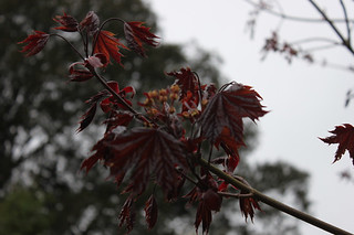 20150502_6003-early-foliage_resize