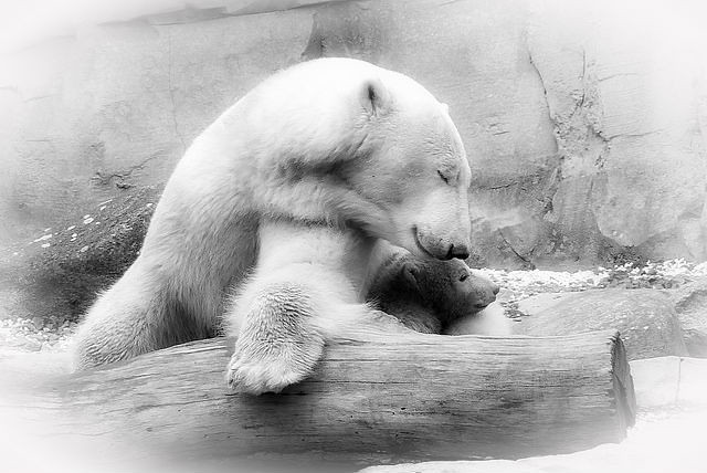 Mom Valeska and her first  cub Lale 2014