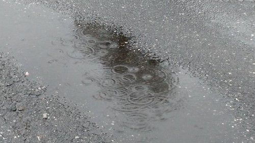 Rain Puddle on Street